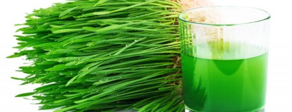 Grüne Smoothies - Kraftquelle für Veganer